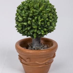 Planted Baytree